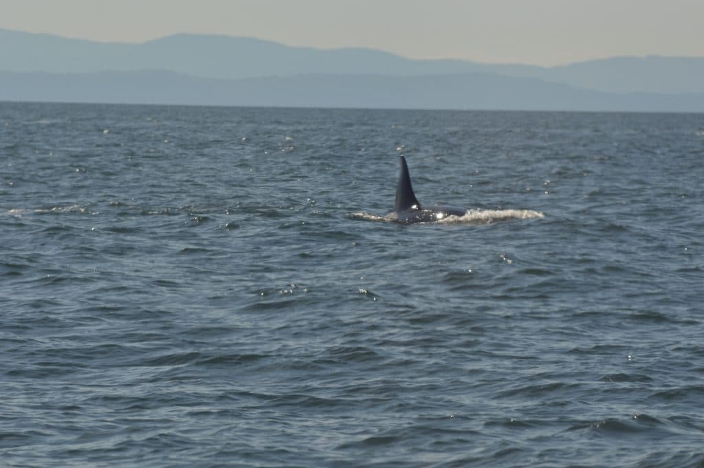 whales 39